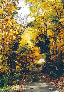 bankei-autumn